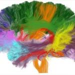 I consumatori di Cannabis hanno un miglioramento cognitivo ed una netta riduzione dell'uso di farmaci