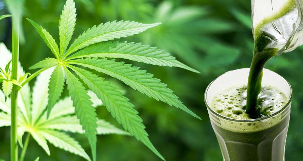 Benefici del succo di cannabis per la nostra salute