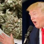 Come potrebbe essere la Presidenza di Trump per il tema Cannabis?