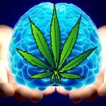 Studio: Cannabis protegge il cervello da lesioni traumatiche e traumi