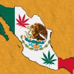 Messico: il Movimento Cittadino chiede la regolamentazione della Cannabis