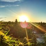 """Costo della Cannabis """"Autoprodotta"""" VS Costo della Cannabis """"Acquistata in Negozio"""""""