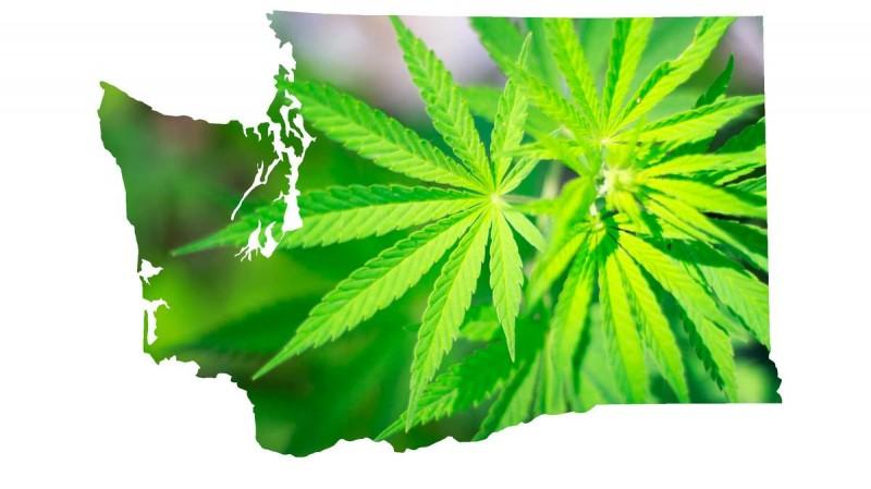 La Cannabis Legale nello Stato di Washington porta oltre 25 milioni di dollari di tasse alle Casse Statali