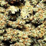 Cannabis contro l'ipertensione: una serie di studi