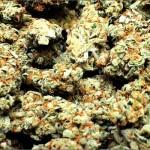 Studio: i Cannabinoidi possono trattare l'infiammazione cronica