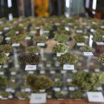 In Colorado l'industria della Cannabis fattura oltre 1 miliardo di dollari nel 2016
