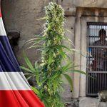 Il Ministro della Giustizia in Thailandia vuole la Cannabis come un'erba officinale