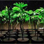 Sativa vs. Indica vs. Hybrid: Qual è la differenza tra le tipologie di Cannabis?