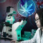 Cannabis: nuova speranza nella lotta contro il cancro al pancreas
