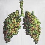 Uso di Cannabis da parte del donatore del polmone non danneggia il trapianto