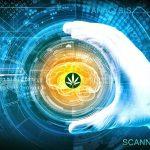 """Perchè la Cannabis ti fa stare bene con il suo """"high""""?"""