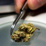 Comprendere i Test Microbiologici sulla Cannabis