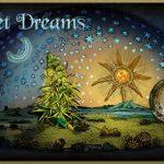Perchè non sempre si sogna quando si usa Cannabis?
