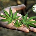 Per un avanzamento sociale e sanitario è necessario svincolare l'autoproduzione di cannabis ad uso personale