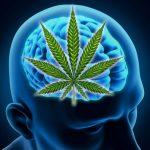 Una Speranza per il cancro al cervello arriva dalla Cannabis