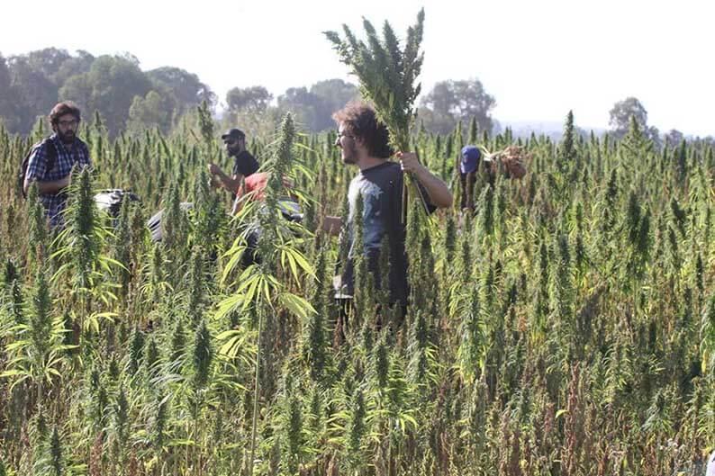 A Cipro si discute la normativa sulla cannabis a livello medico