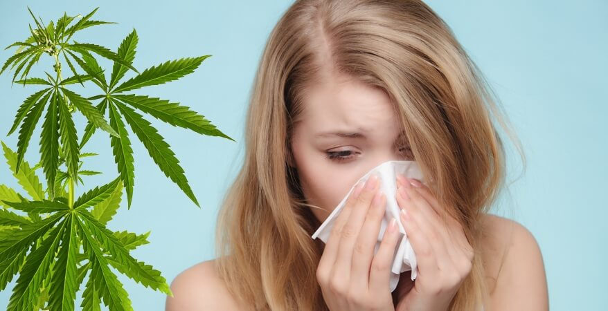 Si può essere allergici alla marijuana?