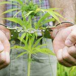 Continua la persecuzione contro i consumatori di cannabis: Una vergogna italiana
