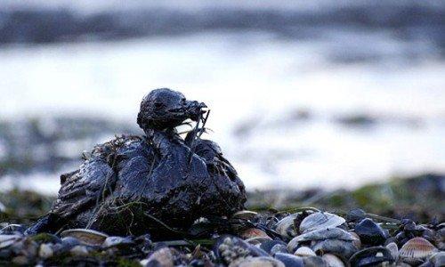 VIDEO! Canapa: Miracolo contro i disastri ambientali!