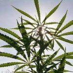 Consiglio Comunale di La Spezia propone mozione per la legalizzazione