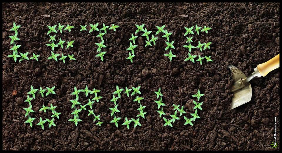 Libertà di Coltivare Cannabis per Uso personale: la base di una riforma normativa parte da qui