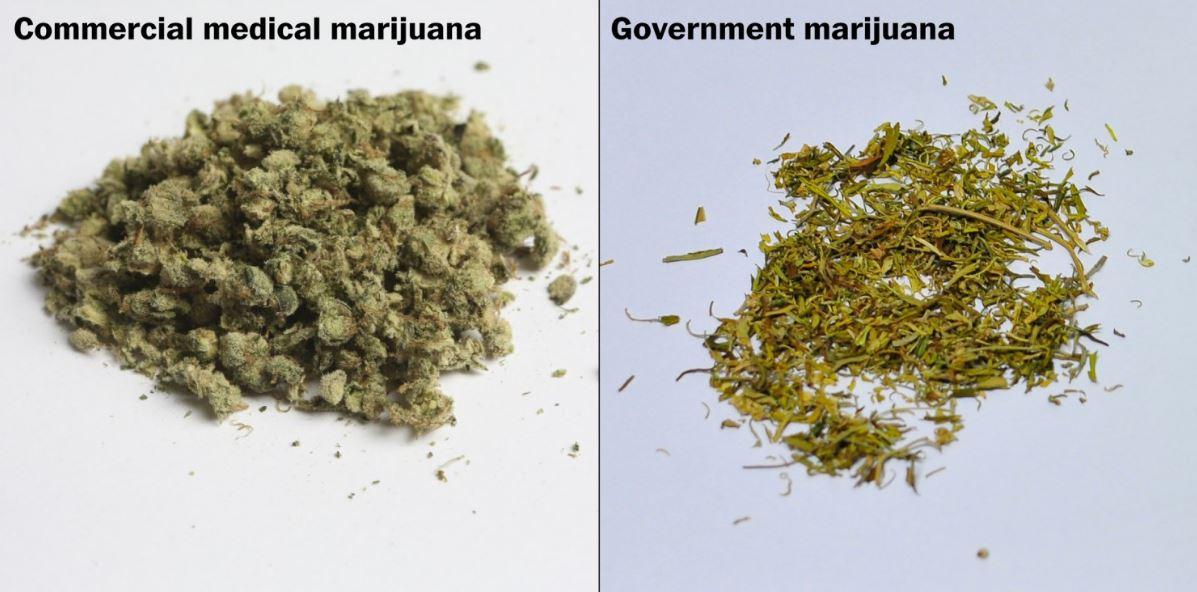 """La Cannabis del Governo Americano non sembra la """"vera"""" Cannabis: una storia che si ripete"""