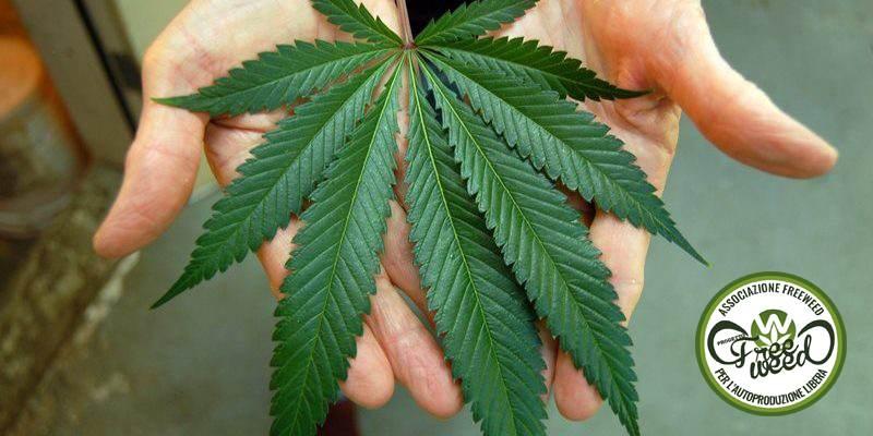 Torta alla Cannabis con Yogurt e Mele