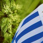 Uruguay: Da luglio la vendita di Cannabis in Farmacia a 1,50 dollari al grammo