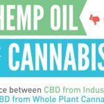 """CBD ricavato dalla """"Canapa Industriale"""" e CBD ricavato dalla """"Cannabis con THC"""": ecco le differenze"""