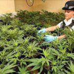 Regno Unito: la polizia perde più di un milione di ore all'anno per la proibizione della cannabis