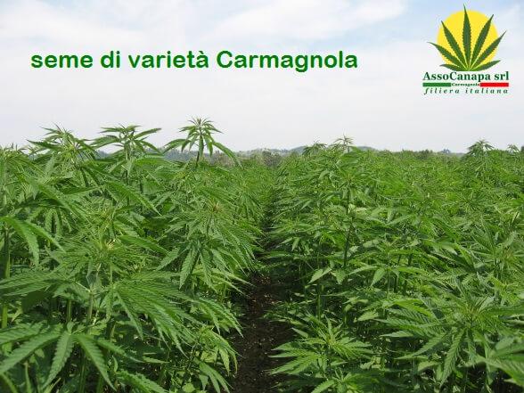 """Assocanapa contro le speculazioni commerciali della """"Cannabis Light"""""""