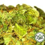 Studio: Uso di Alcol porta cambiamenti negativi nel cervello, mentre l'uso di cannabis non influenza la materia cerebrale