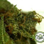 La Task Force del Dipartimento di Giustizia degli USA chiede libertà decisionale per gli Stati sulla Cannabis