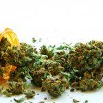 Cannabis ad uso medico: il Ministero fissa il prezzo a 9 Euro / grammo