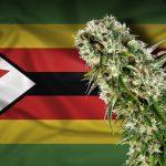 """Lo Zimbabwe pensa alla legalizzazione della Cannabis ad uso medico: """"Una grande azienda Canadese ha proposto investimenti"""""""