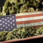 Nonostante le minacce del Presidente Trump, negli Stati Uniti si procede nella regolamentazione della Cannabis