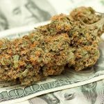 Hollywood verso l'affermazione del mercato della Cannabis ricreativa