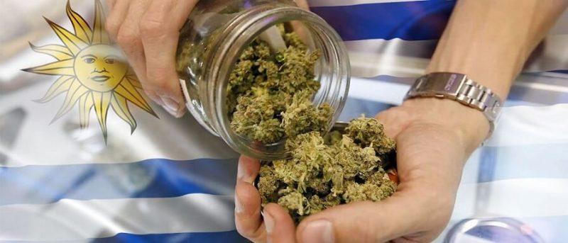 Uruguay regolamenta autoproduzione personale fino a 6 piante