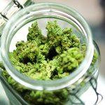 Studio: Cannabis come potenziale rimedio terapeutico per i problemi correlati all'alcol