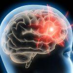 La Cannabis può migliorare le funzioni del cervello? La conferma da uno studio dell'Università di Harvard