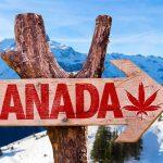 Le aziende del tabacco sono arrabbiate: il Canada impone una tassa bassa sulla cannabis