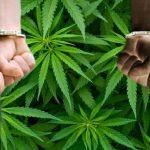 Statistiche 2016: Più Arresti per possesso di Cannabis rispetto agli arresti per crimini violenti