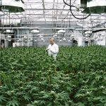 In Canada è stata creata una tecnologia per essiccare la Cannabis in 24 ore