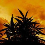 USA: Sessions rescinde il Memorandum Cole che permetteva la regolamentazione della Cannabis per i singoli Stati