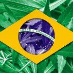 Il Senato del Brasile approva il consumo e la coltivazione di cannabis ad uso medico