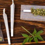 Studio: la Cannabis può avere effetti anti-obesità