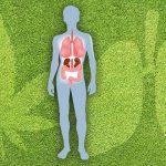 Studio: Cannabis può aiutare a trattare la fibrosi polmonare