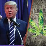 Il Presidente Trump firma un decreto che proteggerà le leggi sulla Cannabis ad uso medico fino al 19 gennaio