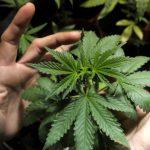"""Racconto di un Attivista: """"Usare cannabis non è un crimine ma un presupposto per il martirio"""""""