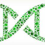 Ecco perchè la Cannabis agisce su ciascuno in modo differente ed il suo rapporto con il nostro DNA